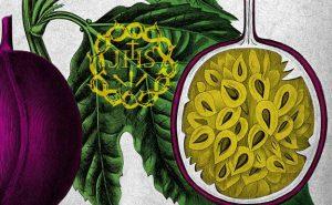 Lista de flor los clavos de cristo para comprar online – Los preferidos