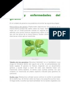 Catálogo para comprar por Internet enfermedades geranios taladro