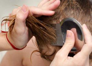 Opiniones y reviews de plancha para el pelo y piojos para comprar Online – Los 20 mejores