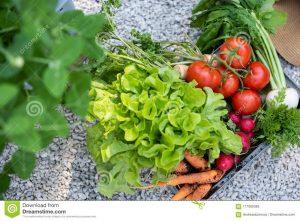 La mejor lista de Jardin Bio Verduras Precio Entrega para comprar online – El TOP 20