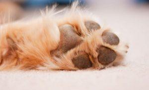 limar uñas perro disponibles para comprar online – Los preferidos