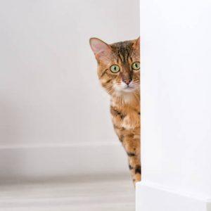 Selección de caida de pelo en gatos causas para comprar por Internet – Los más solicitados