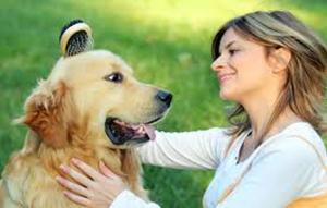 Opiniones y reviews de caida de pelo en perros de pelo corto para comprar en Internet – El Top 30