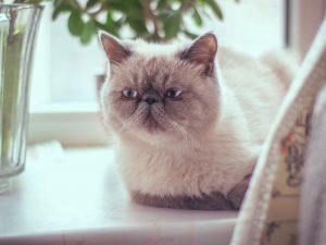 Recopilación de evitar caida de pelo en gatos para comprar Online – Los más solicitados