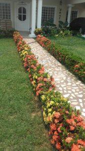 La mejor recopilación de jardin Cubierto Exteriores Aislado Amarillo para comprar en Internet – El Top 30