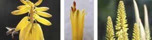 Listado de cuando sale la flor del aloe vera para comprar online – Los más vendidos