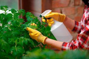 El mejor listado de clavos insecticidas cochinillas para comprar por Internet – Los Treinta favoritos