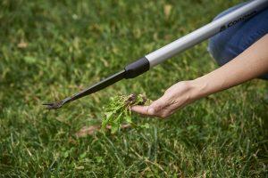 Recopilación de herramientas para quitar malas hierbas para comprar online
