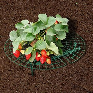 Recopilación de fresas trepadoras para comprar On-line