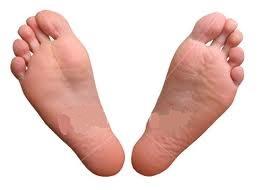 La mejor selección de pies muy secos para comprar por Internet