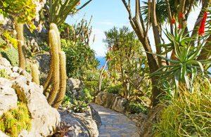 Catálogo de Jardin exotique para comprar online – Los preferidos