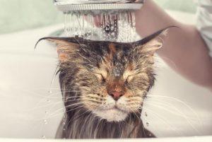 La mejor selección de mejores secadores de pelo para perros para comprar por Internet