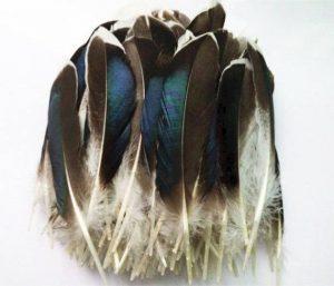 Selección de plumas pelo para comprar Online