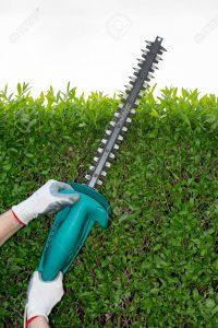 Recopilación de sierra electrica ramas para comprar por Internet – Favoritos por los clientes